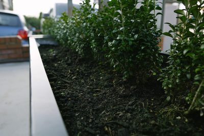 shrubs inside a steel planter at a bar